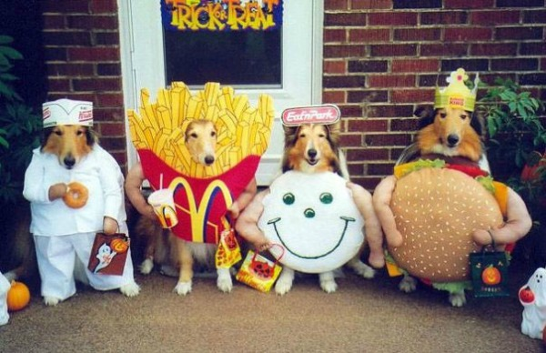 dogs-fast-food