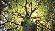 Deep Roots, Strong Branches- How to Find a Marketing Automation Platform That Grows With You