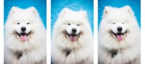 Marketing Lessons From Dogs