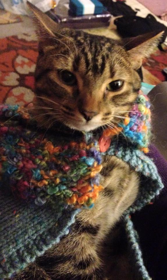 Colorful Sweater on Myrtle the Cat